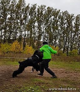 Адам Рэйси Стайл РУССКИЙ РОК на тренировке ЗКС!