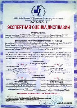 Адам Рэйси Стайл РЫЦАРЬ СВЕТА - Дисплазия ТБС: HD-A/A, ЛС: ED-0/0